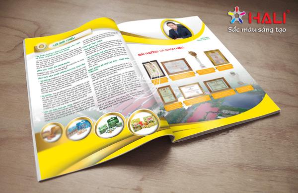 thiet ke catalogue san pham 2
